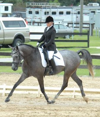 DJ_riding_dressage_class_Lipianzer_Arab_cross